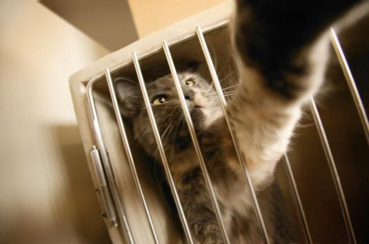 « Abandonner un chat : Pourquoi ? Comment ? Quelle